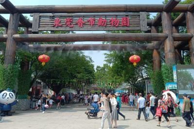 香市動物園十一黃金周攬客8萬人次 大熊貓館是網紅打卡點