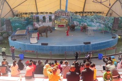 慢小孩樂遊香市動物園