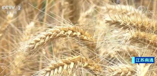 現代化科技助力麥收 確保小麥顆粒歸倉