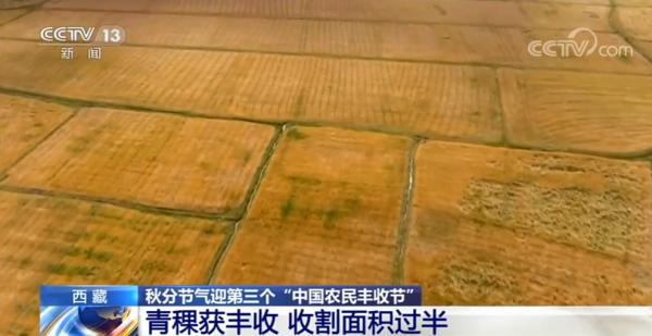 中國西藏青稞產量預計將穩定在80萬噸