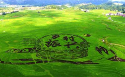 圍繞質量效益振興鄉村產業